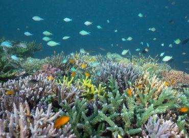 Octopus, le première ONG Française engagée à 360° dans la sauvegarde des écosystèmes marins